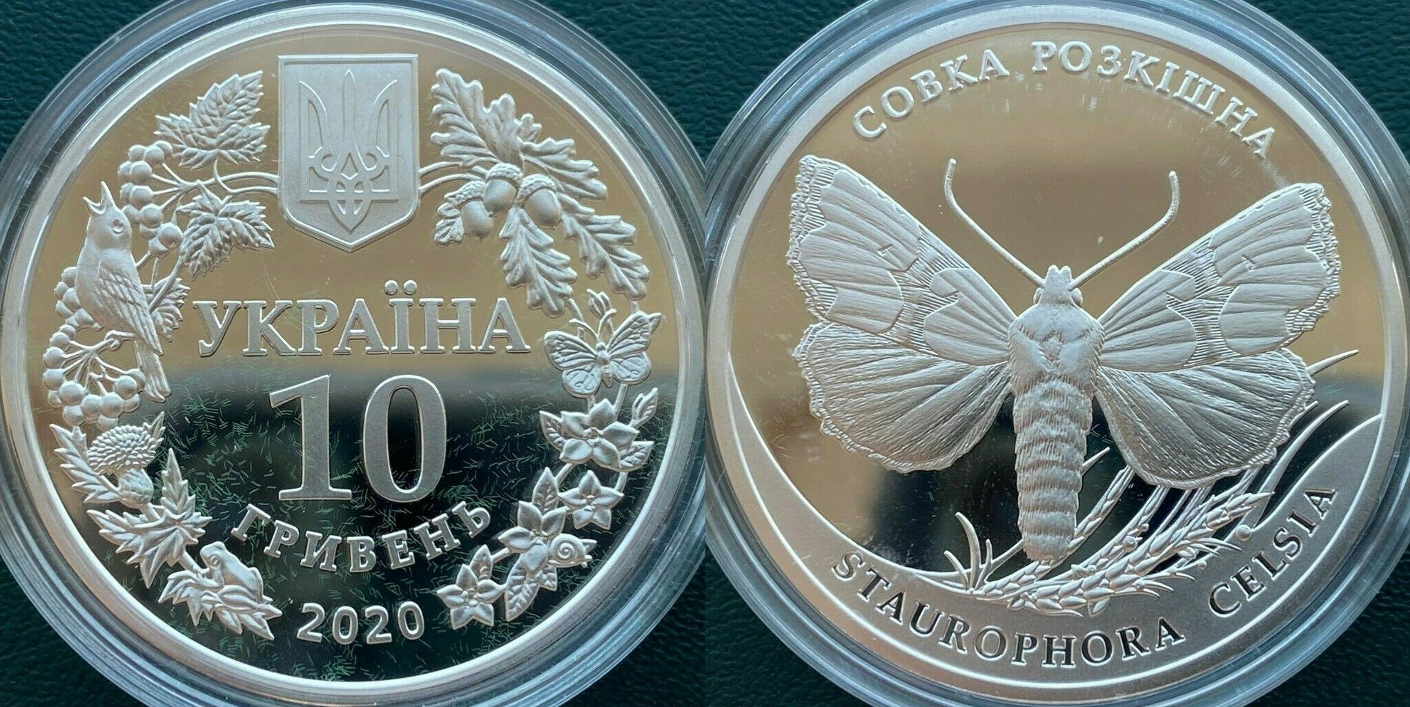 ukraine-2020-papillon-staurophora-celsia
