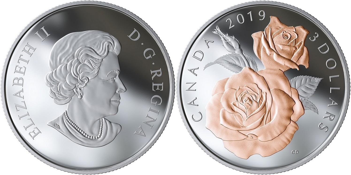 canada-2019-fleurs-du-rosier-reine-elizabeth