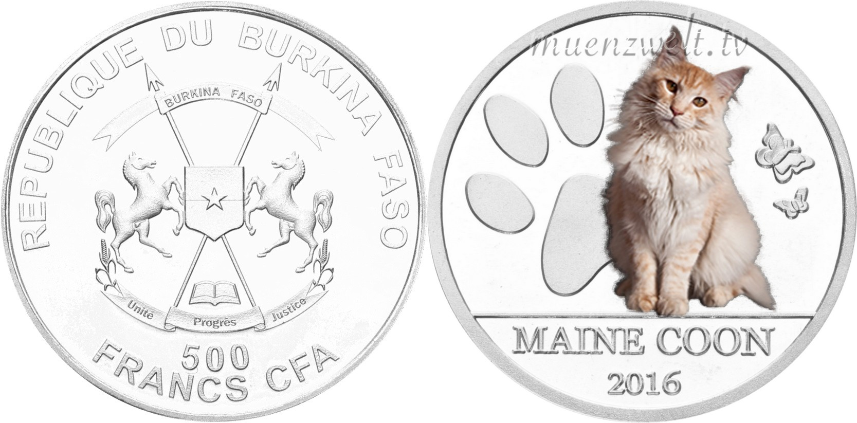 burkina faso 2016 chats du monde maine coon