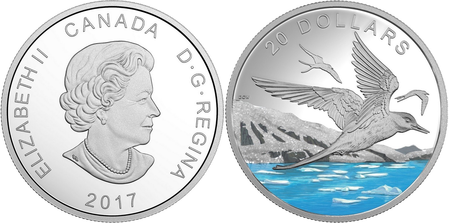 canada 2017 sterne arctique