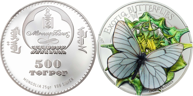 mongolie 2017 papillons exotiques