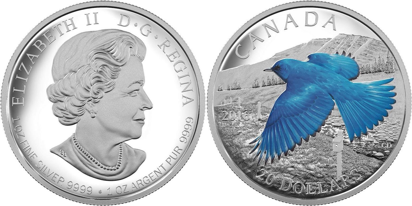 canada 2016 oiseaux migrateurs merle bleu