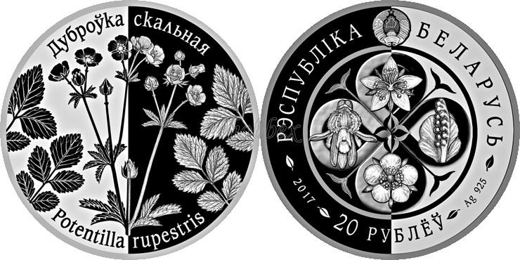 belarus 2017 plantes vivaces Potentilla rupestris