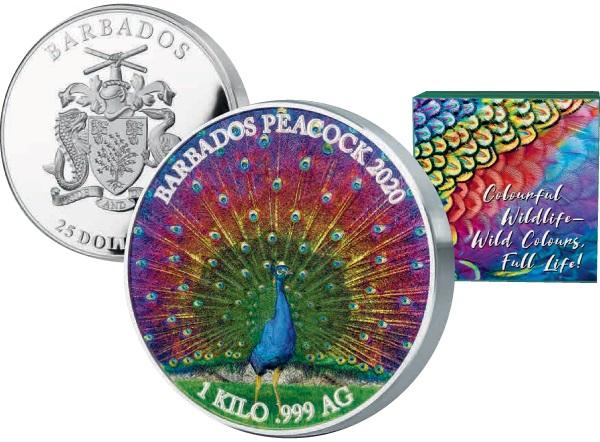 barbade-2020-paon-kg
