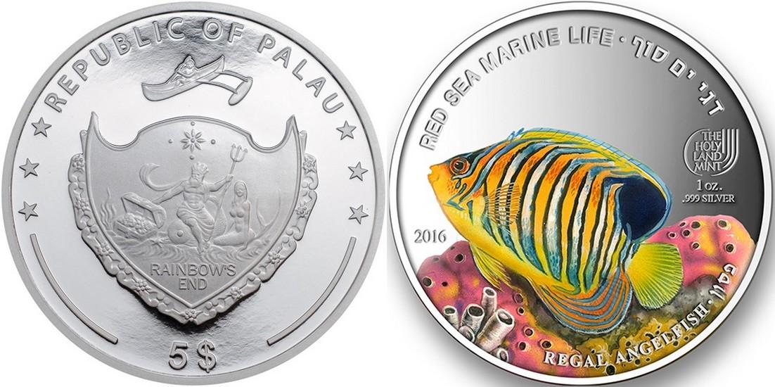 palau 2016 vie marine mer rouge poisson ange