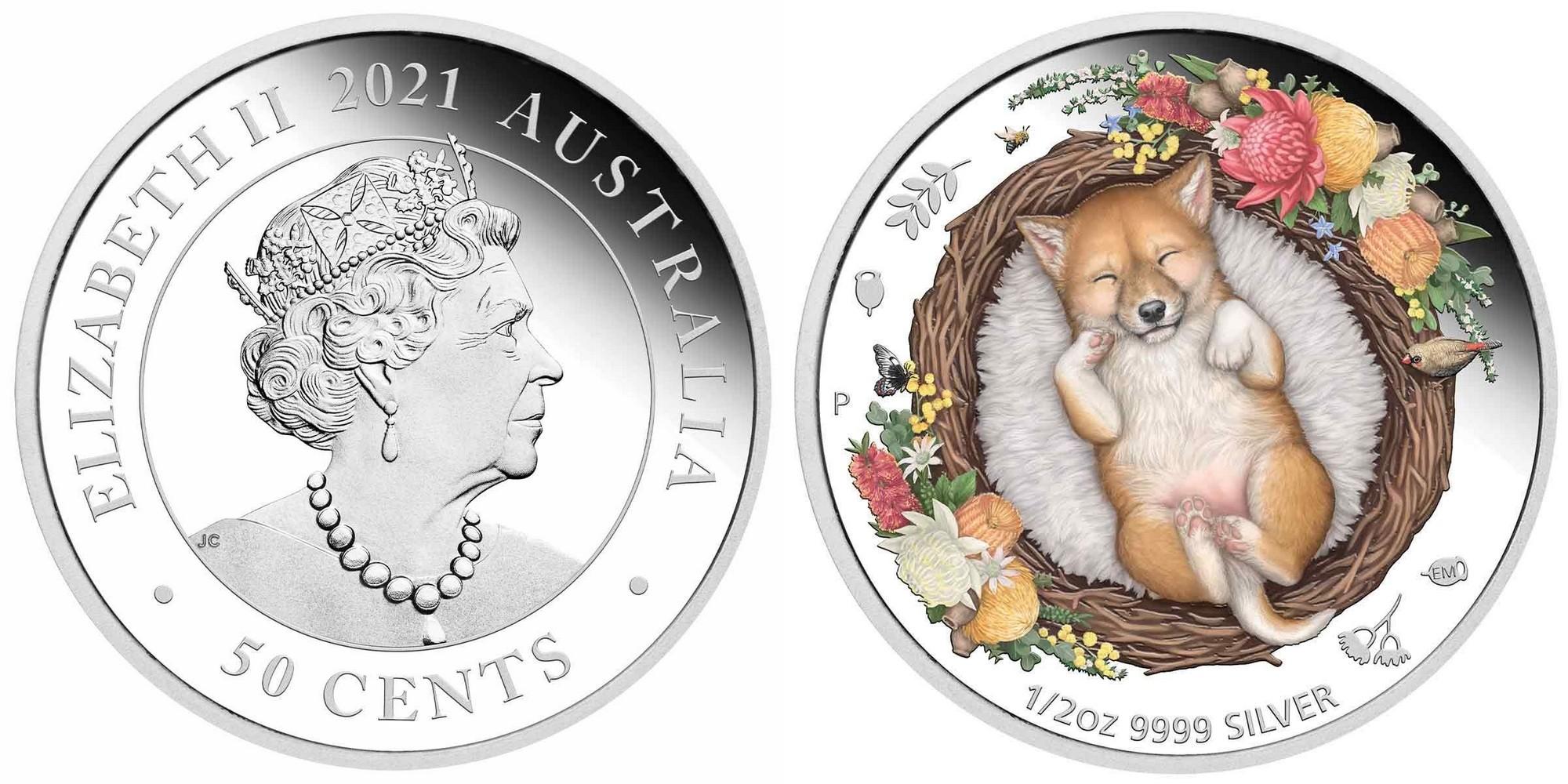 australie-2021-dingo-qui-reve