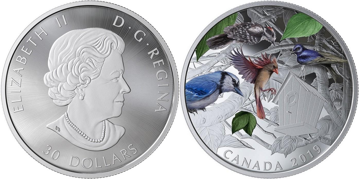 canada-2019-oiseaux-du-voisinage