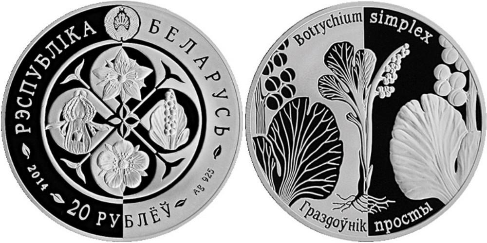 belarus 2014 botrychium simplex.jpg