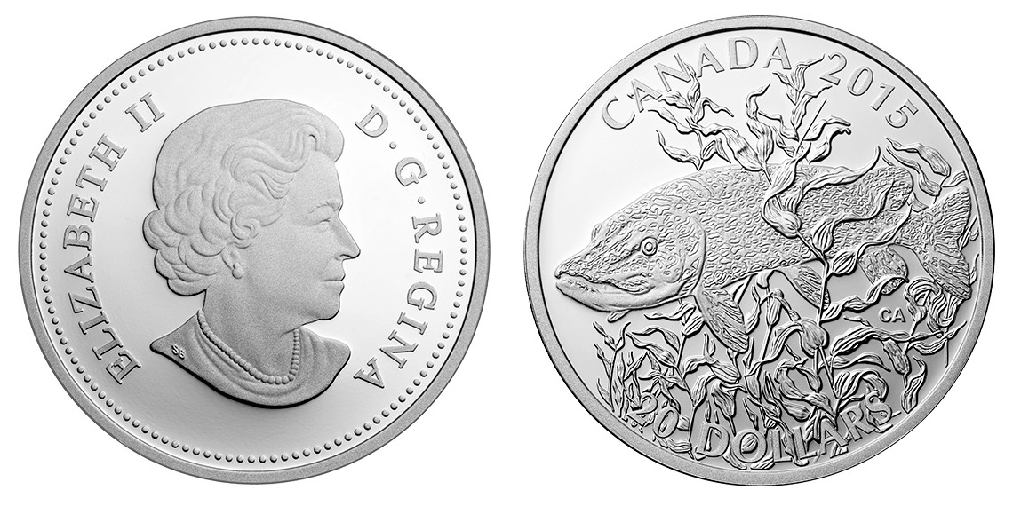 canada 2015 poisson-gibier grand brochet.jpg