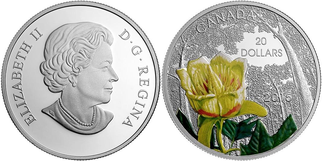 canada 2015 tulipier de virginie.jpg