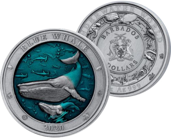 barbade-2020-baleine-bleue