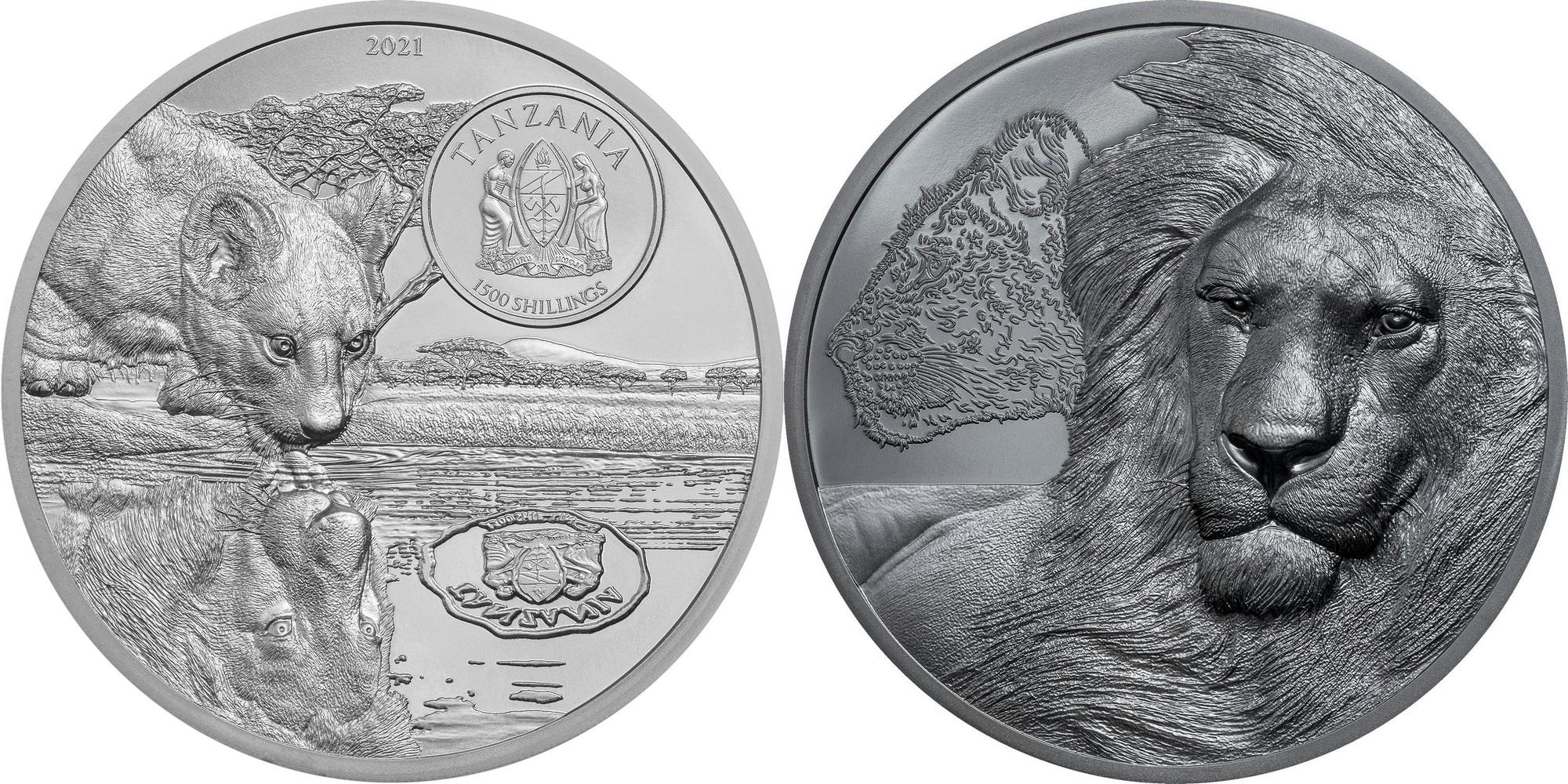 tanzanie-2021-lions-grandissant