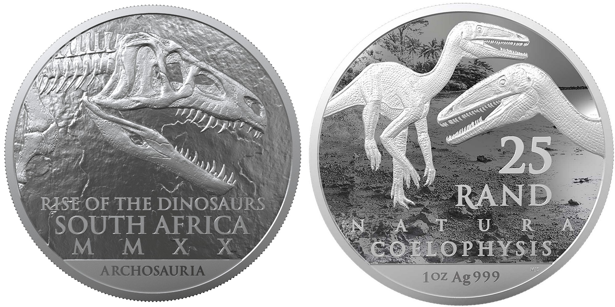afsud-2020-dinosaures-coelophysis